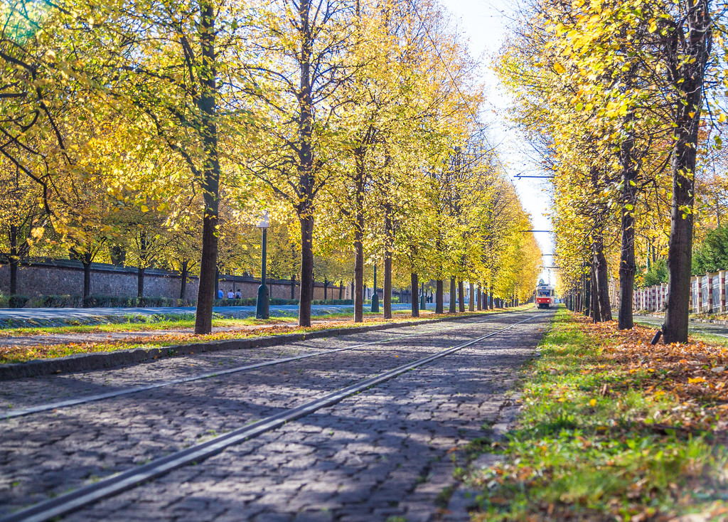 Trams and Trees in Prague