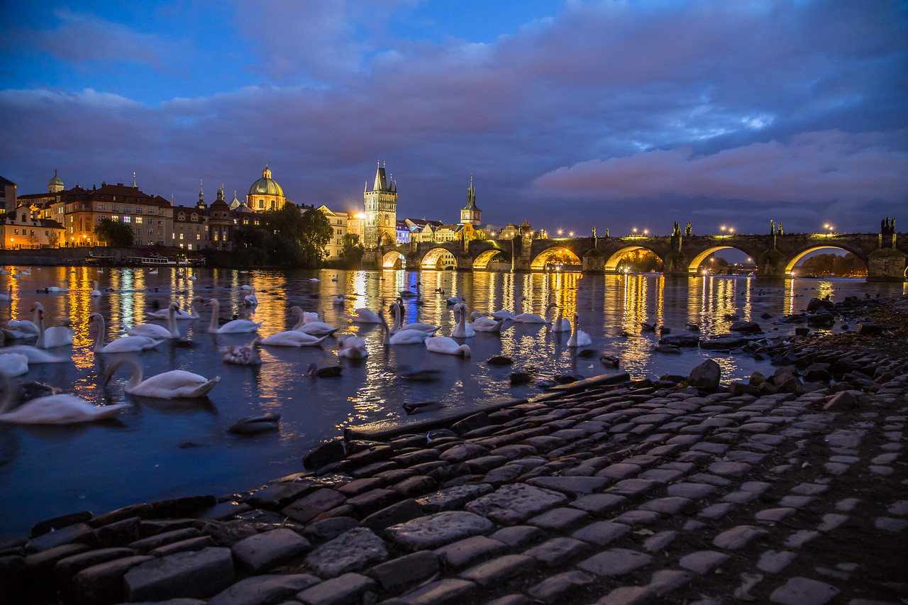 Charles Bridge at night and swans