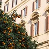 Orange Trees in Rome