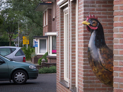 The Barneveld Chicken