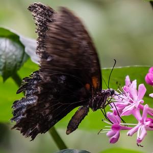 Jardin des Papillons, the Butterfly Garden, Grevenmacher, LU