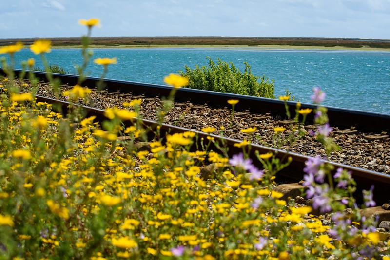 Railroad tracks along the Ria Formosa Reserve, Faro Algarve