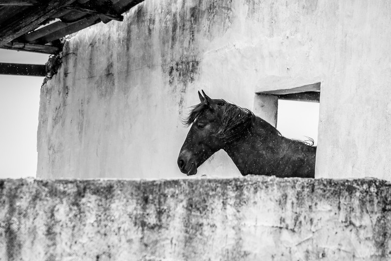 Horse in the rain, Castro Marim, Algarve