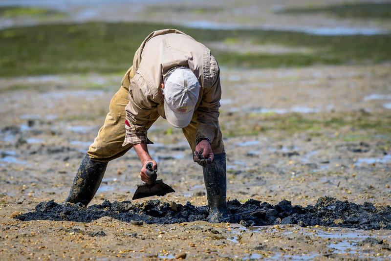 Clam digging near Sao Lourenco, Faro, Algarve