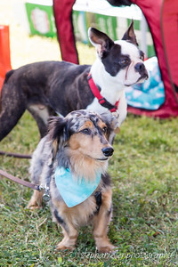 _MG_3310Woofstock_2016_Stephaniellen_Photography