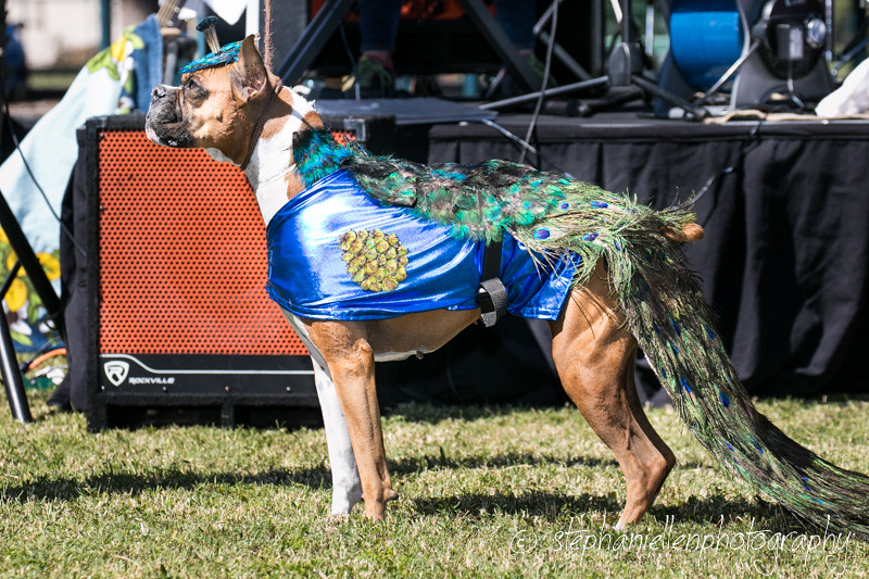 _MG_3776Woofstock_2016_Stephaniellen_Photography
