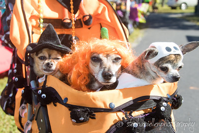 _MG_3287Woofstock_2016_Stephaniellen_Photography