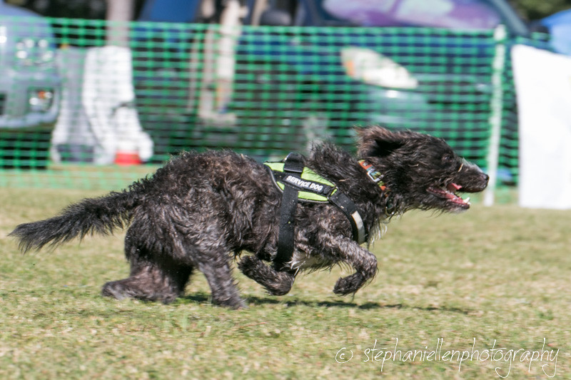 _MG_4122Woofstock_2016_Stephaniellen_Photography