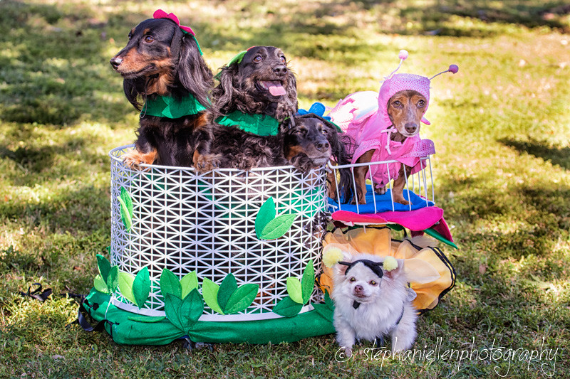 _MG_3648-EditWoofstock_2016_Stephaniellen_Photography