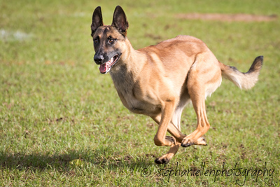 _MG_2334Up_dog_International_2016_StephaniellenPhotography