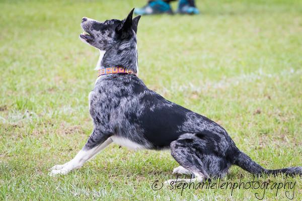 _MG_2814Up_dog_International_2016_StephaniellenPhotography