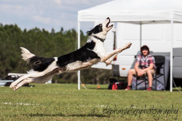 _MG_3339Up_dog_International_2016_StephaniellenPhotography