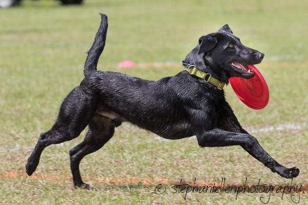 _MG_3044Up_dog_International_2016_StephaniellenPhotography