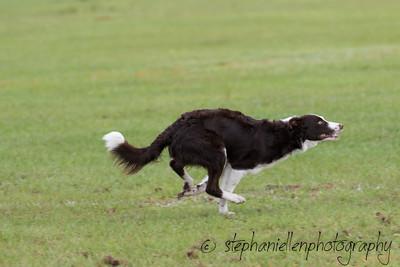 _MG_2292Up_dog_International_2016_StephaniellenPhotography