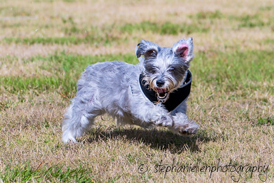 Woofstock_carrollwood_tampa_2018_stephaniellen_photography_MG_8262