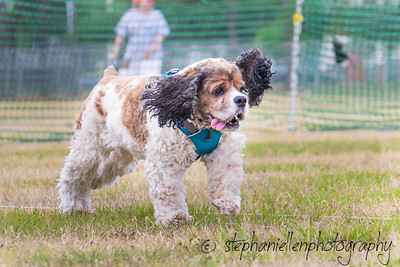 Woofstock_carrollwood_tampa_2018_stephaniellen_photography_MG_8789