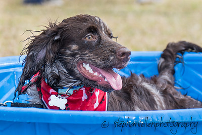 Woofstock_carrollwood_tampa_2018_stephaniellen_photography_MG_8321