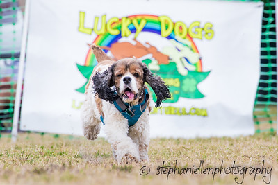 Woofstock_carrollwood_tampa_2018_stephaniellen_photography_MG_8781