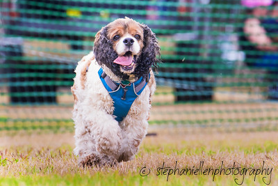 Woofstock_carrollwood_tampa_2018_stephaniellen_photography_MG_8785-Edit