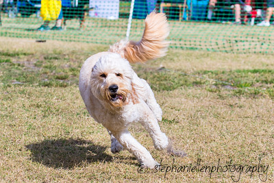 Woofstock_carrollwood_tampa_2018_stephaniellen_photography_MG_8288