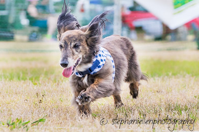 Woofstock_carrollwood_tampa_2018_stephaniellen_photography_MG_8775