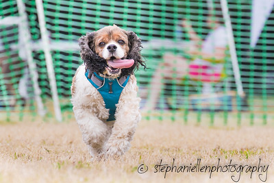 Woofstock_carrollwood_tampa_2018_stephaniellen_photography_MG_8793