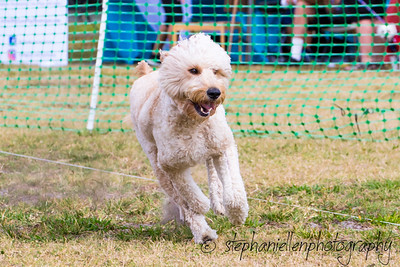 Woofstock_carrollwood_tampa_2018_stephaniellen_photography_MG_8283