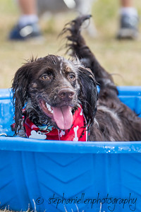 Woofstock_carrollwood_tampa_2018_stephaniellen_photography_MG_8320