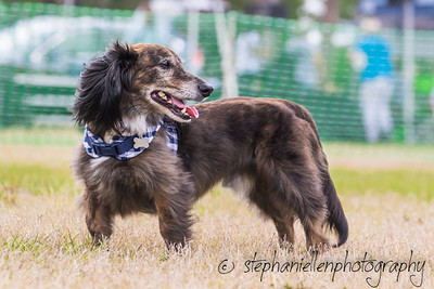 Woofstock_carrollwood_tampa_2018_stephaniellen_photography_MG_8768