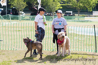 Woofstock_carrollwood_tampa_2018_stephaniellen_photography_MG_8255