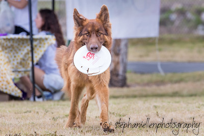 Woofstock_carrollwood_tampa_2018_stephaniellen_photography_MG_8794