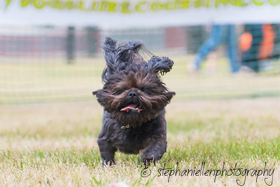 Woofstock_carrollwood_tampa_2018_stephaniellen_photography_MG_8750