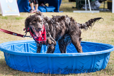 Woofstock_carrollwood_tampa_2018_stephaniellen_photography_MG_8314