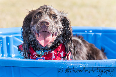 Woofstock_carrollwood_tampa_2018_stephaniellen_photography_MG_8318