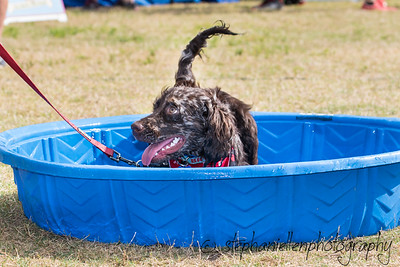 Woofstock_carrollwood_tampa_2018_stephaniellen_photography_MG_8316