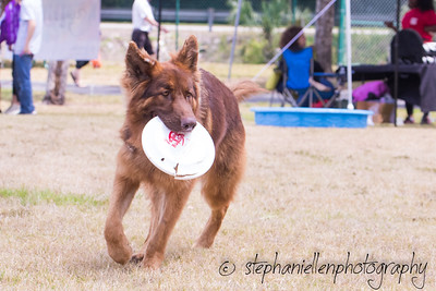 Woofstock_carrollwood_tampa_2018_stephaniellen_photography_MG_8801