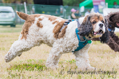 Woofstock_carrollwood_tampa_2018_stephaniellen_photography_MG_8791
