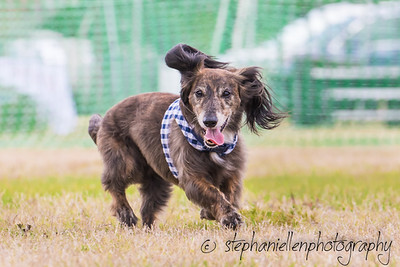 Woofstock_carrollwood_tampa_2018_stephaniellen_photography_MG_8765