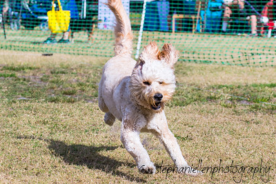 Woofstock_carrollwood_tampa_2018_stephaniellen_photography_MG_8287