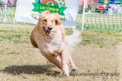 Woofstock_carrollwood_tampa_2018_stephaniellen_photography_MG_8379