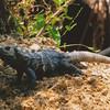 """Caribbean Reptile"" - Ali L."