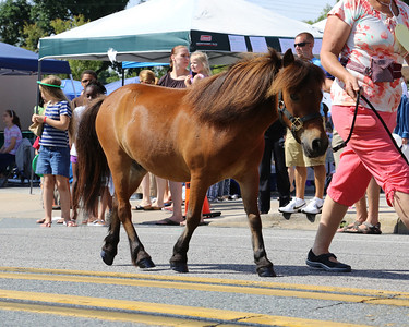 2013 Middletown Peach Festival - Miniature Horse