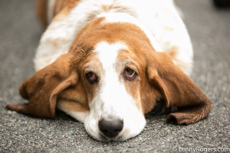 2018 Brews for Bassets-9