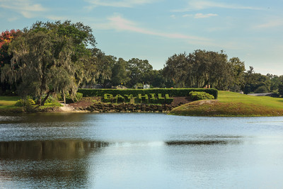Bay Hill Hedges IMG5615