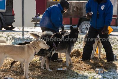 Winterfest_20140118_002