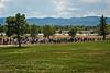 Denver NF Walk 2013-8067