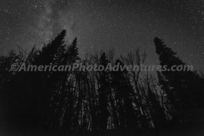 Teton Forest_20170818_0048