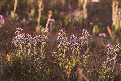 Teton Forest_20170819_0204