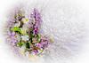 Ariel_bridal-1432