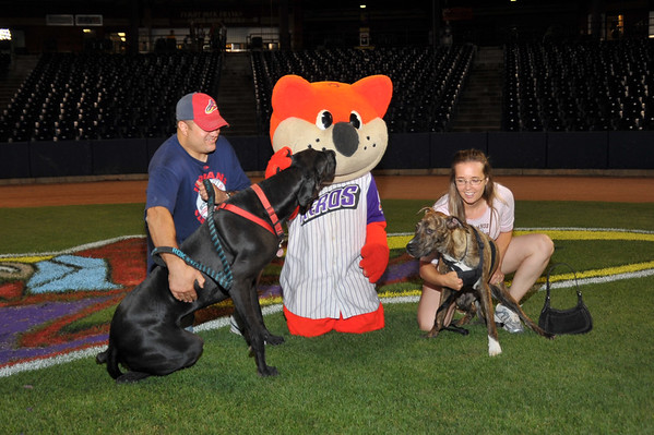 Paws & Pitches